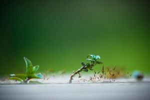 My Little Big Planet by xii-iD