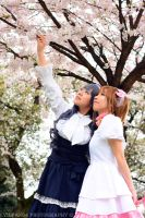 CCS Cos: Cherry Blossom Viewing by Ceraphic