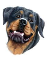 Rottweiler by SteelC