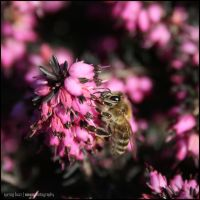 spring buzz by nown