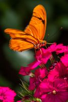 Lovely Colors of Butterflies by 904PhotoPhactory
