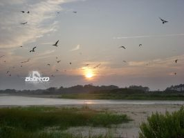 Assateague Island Sunset by abentco