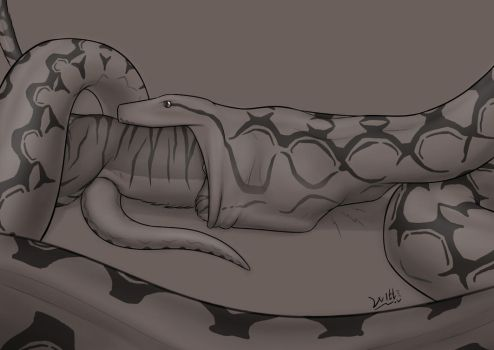 Reticulated Python 3/5 by WittNV