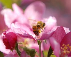 Aww My Bees by GMCPhotography