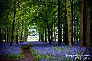 Walk through the bluebells. Day 146 - 26/05/13 by oEmmanuele