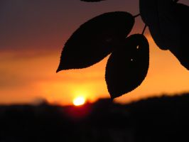 Sunset with leaves by varga-thamas