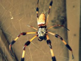 The Orb Weaver by BloodyMinded6
