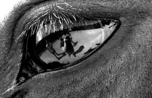 Through the Eye of a Horse by confused-equine