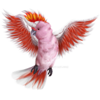 Cockatoo SCC by TinTans