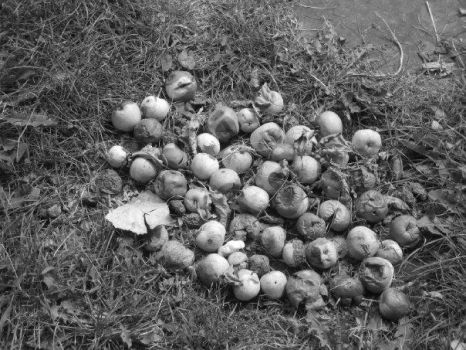 Black and White crab apples by Bathofglittergirl