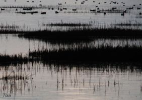 DUCKS'PARADISE by isabelle13280