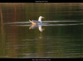 Seagull by ALP-Stock