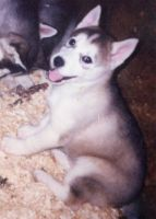 Joey as a puppy by t-subgenius