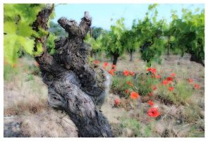 Viticulture by Hubert11