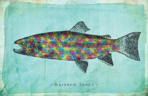 Rainbow Trout by goodmorningvoice