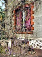 Abandoned house by SUDOR