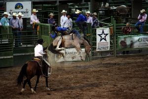 Rodeo: Bronc Riding (11) by DreamsRunningWild