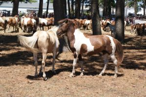 Chincoteague Pony 181 by LusciousxLollies