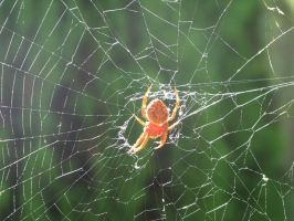 Spider in web series two 01 by teletran