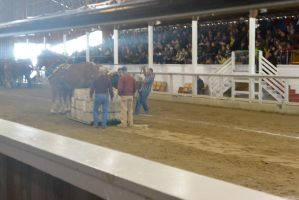 Horse Weight Pulling Competition 9 by Miss-Tbones