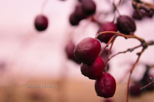 Red Fruit by magicbut3rfly