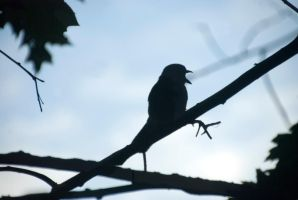 Jay In Silhouette, Screaming by Miss-Tbones