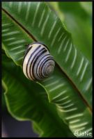 Snail by pinkapple04