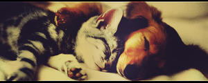 Dog and Cat by FleXmA