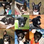 Lupin Ear Collage by usedbooks