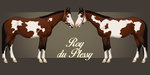 ROY du Plessy - the young dancing star by BH-Stables