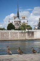 Summer Paris stock 8 by Random-Acts-Stock