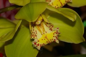 Green Orchid by PatGoltz