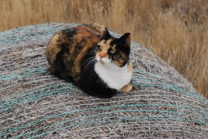 Calico by TheWanderer2030