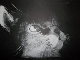 Chalked Cat by DeathGoddess231