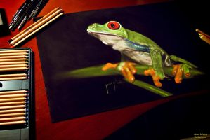 Frog by zuliban
