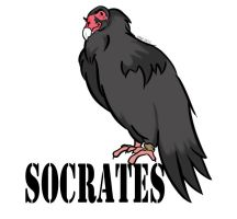 Socrates the Turkey Vulture 01 by TheSleeperAwakes