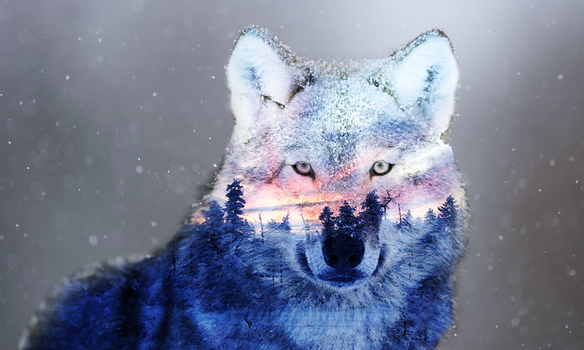 Wolf by furrysnowwolf