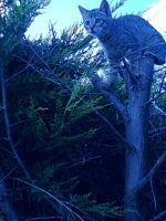 Cat stuck in a tree by Hellsdancer