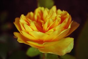 Yellow by Amy-Zarah