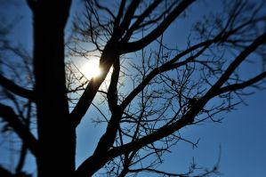 Sun Behind The Tree by LDFranklin