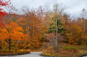 White Mountains  Fall Foliage  150 by FairieGoodMother