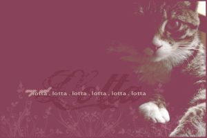 my cat . lotta . by AnbeliciousnA