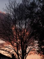 Sunset Trees... by AlfiBOh