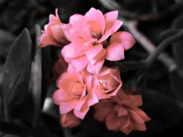 Little Flowers  -edited- by IoannisCleary