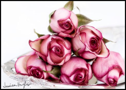 Roses by TimelessImages