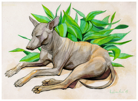 Xoloitzcuintle by cut-box