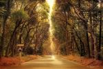 The road to Meiji Shrine by Pajunen