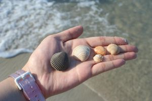 Seashells by SmellsLikeDookie