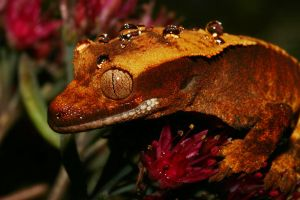 Autumn crestie 10 by AngiWallace