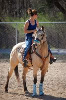 Buckskin by equineinnocence